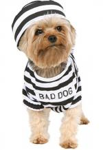 bad_dog.jpg